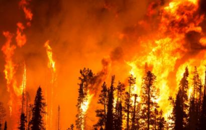 """USA´s nye administration sætter klimaet først: """"Akut national sikkerhedstrussel"""""""