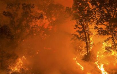 Skelsættende FN-rapport forudser voldsomme klimaændringer langt tidligere end hidtil antaget