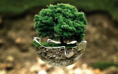 Stor Cambridge analyse: Naturen er ofte mere værd når den passer sig selv