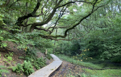 De nye naturnationalparker kommer sandsynligvis til at ligge disse steder