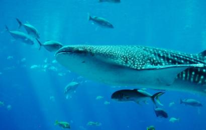Australien freder havområde dobbelt så stort som Great Barrier Reef